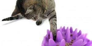 Catch hengelende kat